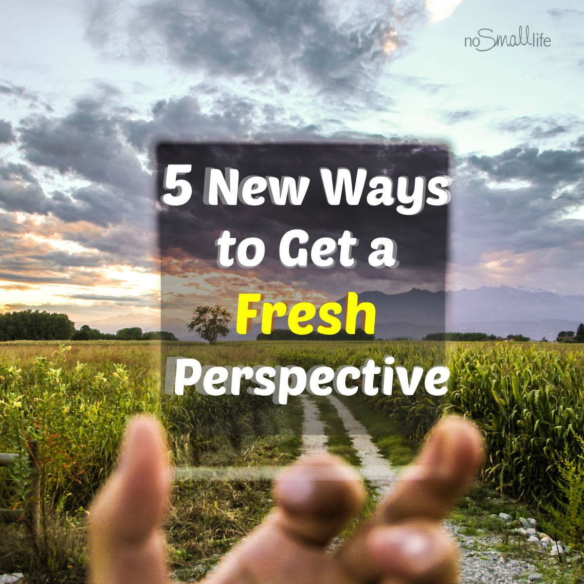 Overwhelmed? Here are 5 New Ways to Get a Fresh Perspective!